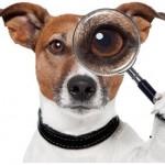 online prospecting